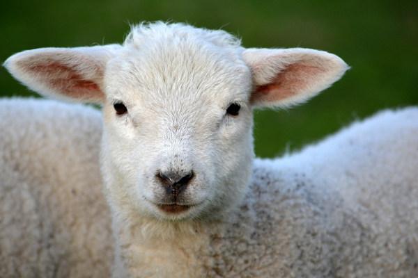Kremelina pre zvieratá - hospodárstvo