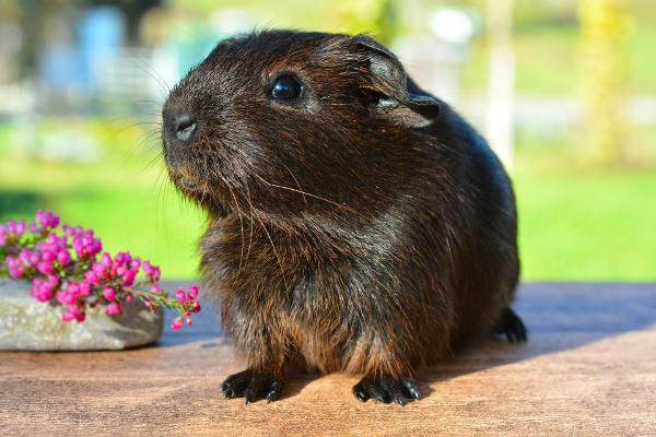 Kremelina pre zvieratá od Vitatrend