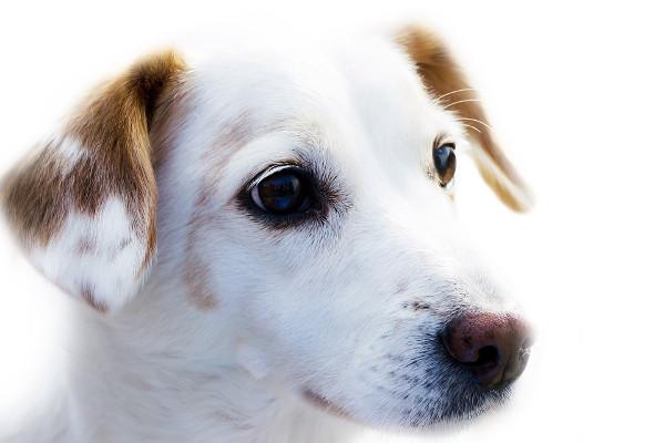 Křemelina pro zvířata